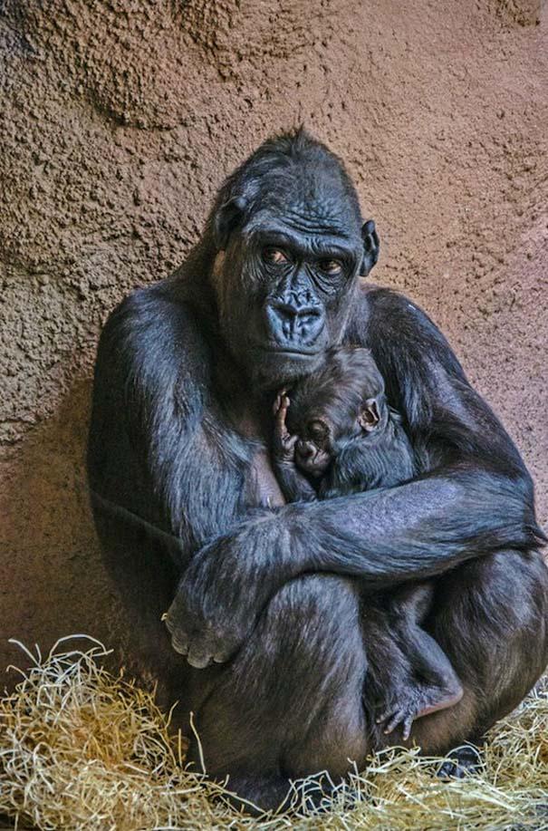 Φωτογραφίες ζώων που ξέρουν τι θα πει αγάπη (4)