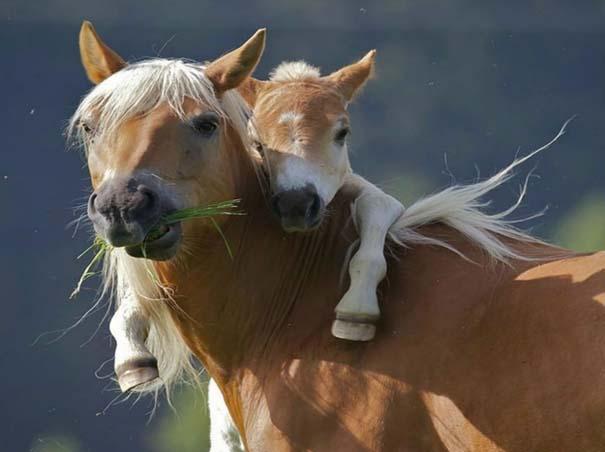 Φωτογραφίες ζώων που ξέρουν τι θα πει αγάπη (5)