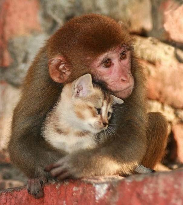Φωτογραφίες ζώων που ξέρουν τι θα πει αγάπη (7)
