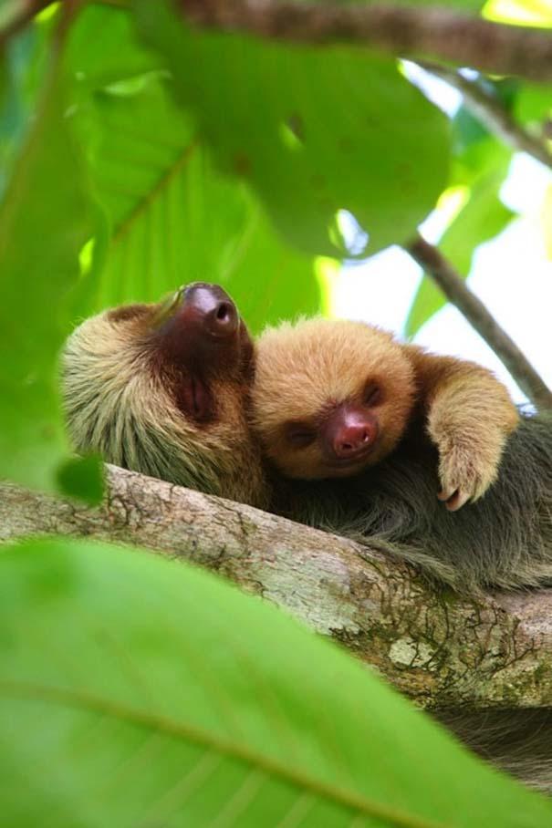 Φωτογραφίες ζώων που ξέρουν τι θα πει αγάπη (8)