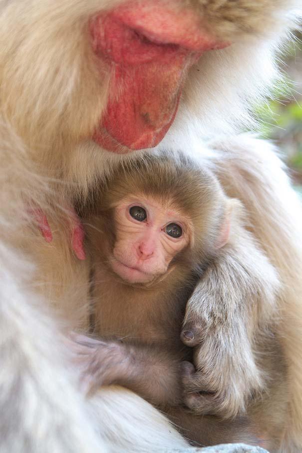 Φωτογραφίες ζώων που ξέρουν τι θα πει αγάπη (10)