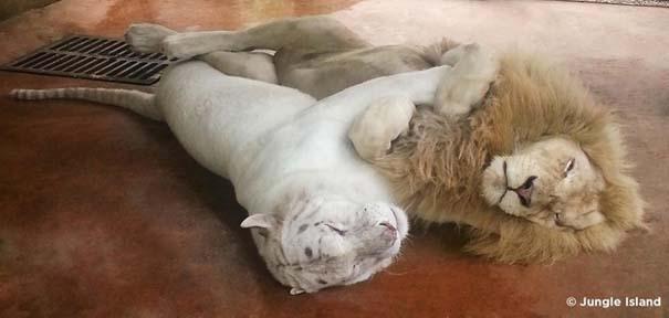 Φωτογραφίες ζώων που ξέρουν τι θα πει αγάπη (12)