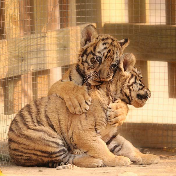 Φωτογραφίες ζώων που ξέρουν τι θα πει αγάπη (13)