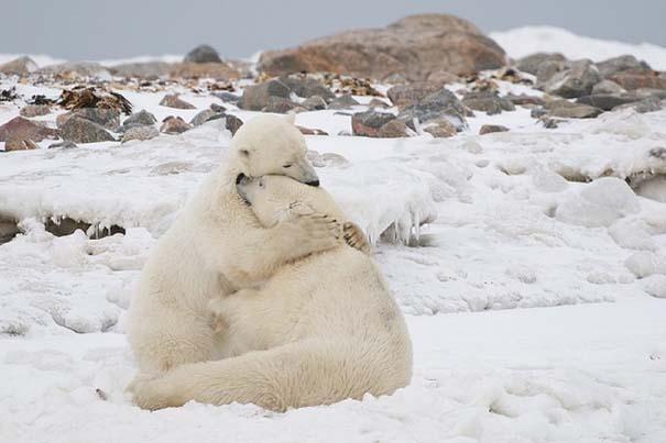 Φωτογραφίες ζώων που ξέρουν τι θα πει αγάπη (15)