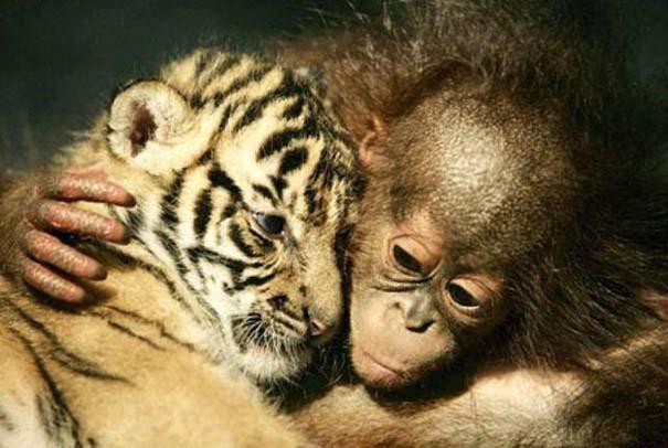 Φωτογραφίες ζώων που ξέρουν τι θα πει αγάπη (16)
