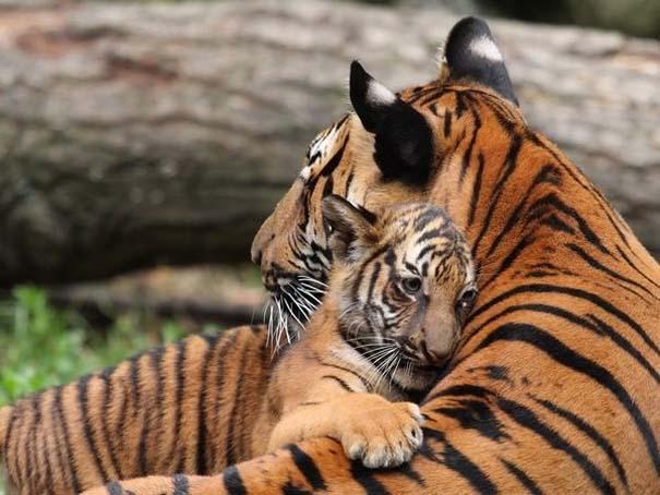 Φωτογραφίες ζώων που ξέρουν τι θα πει αγάπη (17)