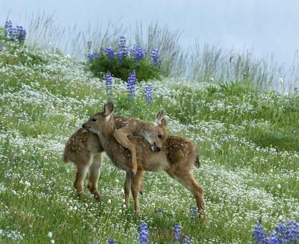 Φωτογραφίες ζώων που ξέρουν τι θα πει αγάπη (18)