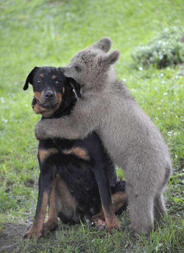 Φωτογραφίες ζώων που ξέρουν τι θα πει αγάπη (23)