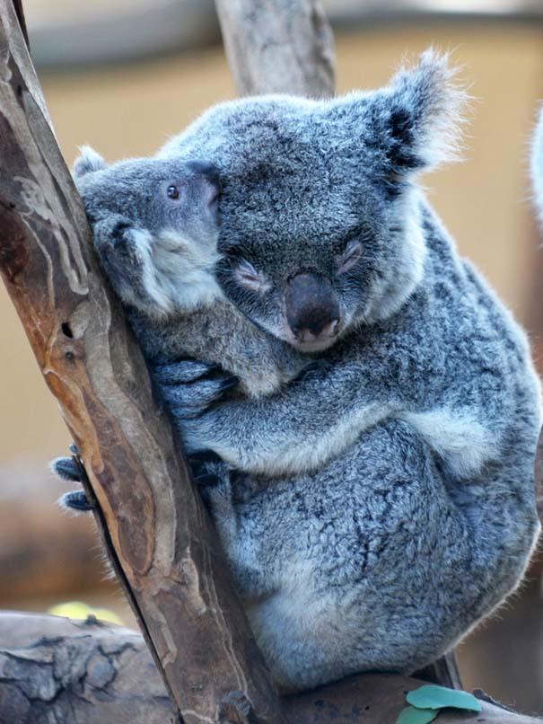 Φωτογραφίες ζώων που ξέρουν τι θα πει αγάπη (24)