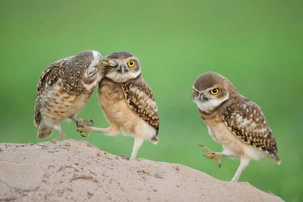 Φωτογραφίες ζώων που ξέρουν τι θα πει αγάπη (26)