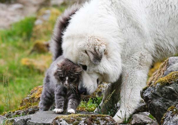 Φωτογραφίες ζώων που ξέρουν τι θα πει αγάπη (28)