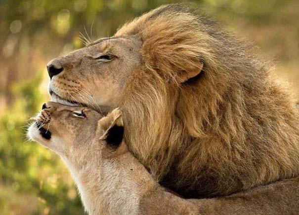 Φωτογραφίες ζώων που ξέρουν τι θα πει αγάπη (29)