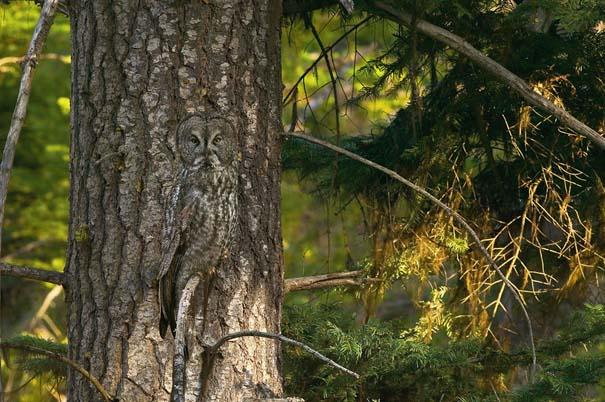 Απίθανες φωτογραφίες ζώων που είναι μετρ του καμουφλάζ (1)