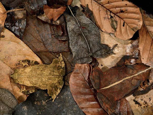 Απίθανες φωτογραφίες ζώων που είναι μετρ του καμουφλάζ (10)