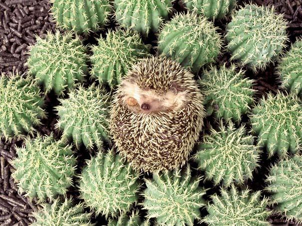 Απίθανες φωτογραφίες ζώων που είναι μετρ του καμουφλάζ (16)