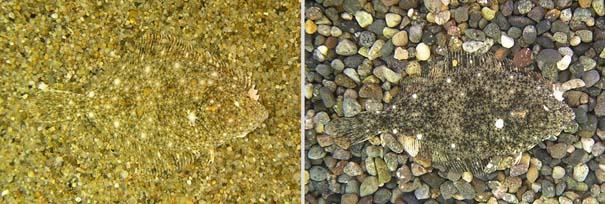Απίθανες φωτογραφίες ζώων που είναι μετρ του καμουφλάζ (20)