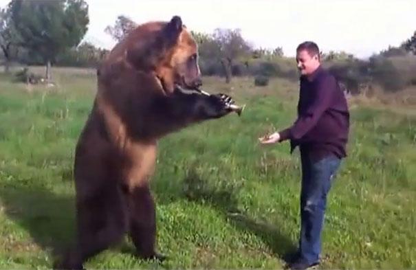 Αυτή η αρκούδα τρελαίνει κόσμο!