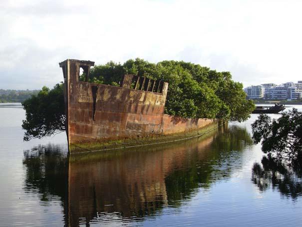 Εγκαταλελειμμένο καράβι 102 ετών έχει μετατραπεί σε πλεούμενο δάσος (1)