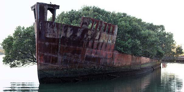 Εγκαταλελειμμένο καράβι 102 ετών έχει μετατραπεί σε πλεούμενο δάσος (2)