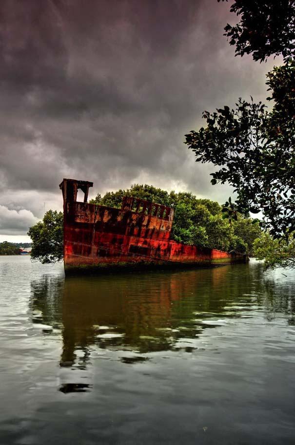 Εγκαταλελειμμένο καράβι 102 ετών έχει μετατραπεί σε πλεούμενο δάσος (5)