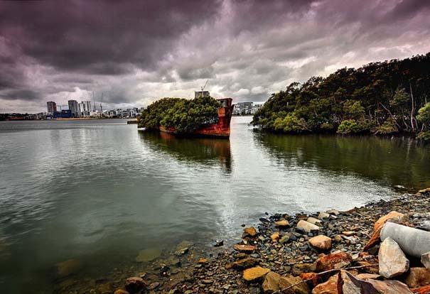 Εγκαταλελειμμένο καράβι 102 ετών έχει μετατραπεί σε πλεούμενο δάσος (6)