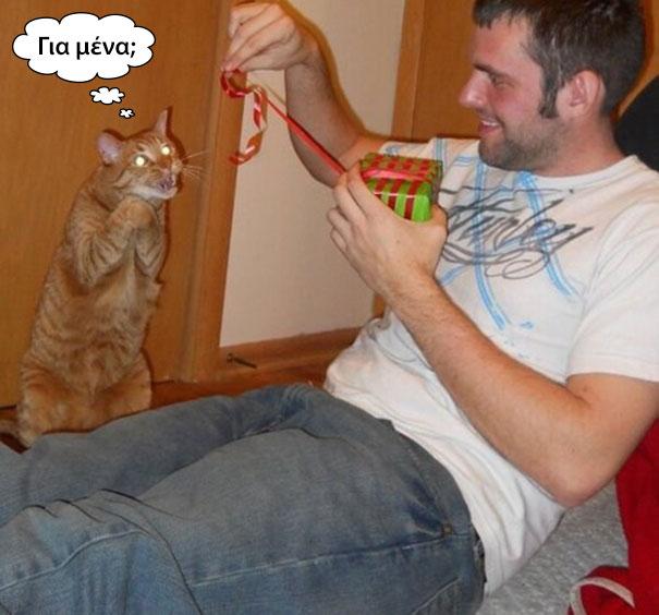 Γάτες που... κάνουν τα δικά τους! | Otherside.gr (5)