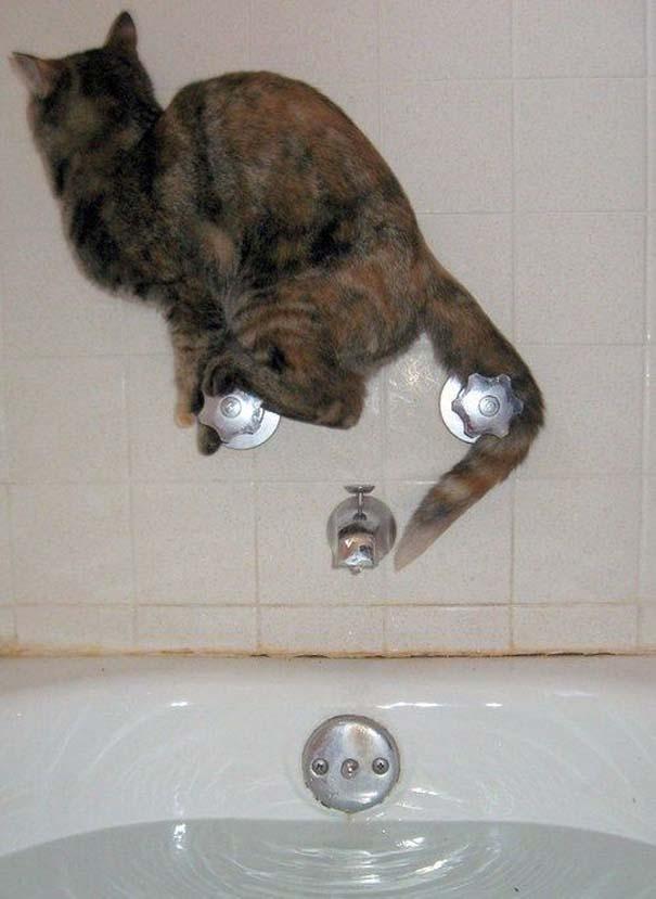 Γάτες που... κάνουν τα δικά τους! (14)