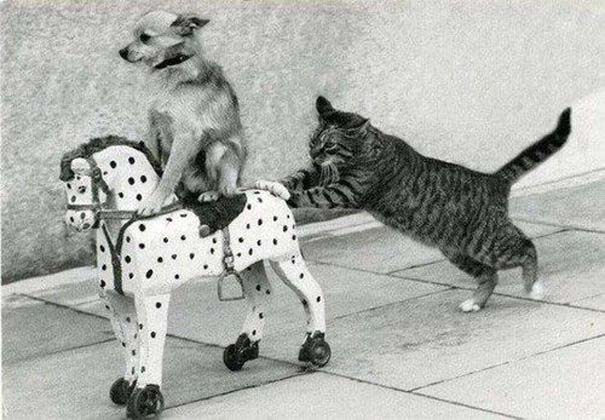 Γάτες που... κάνουν τα δικά τους! (3)
