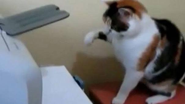 Γάτες εναντίον εκτυπωτών