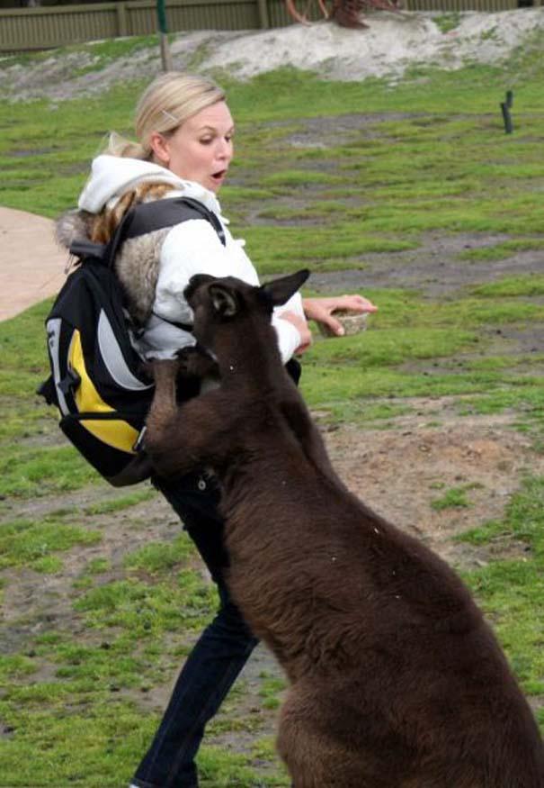 Γυναίκες και ζώα: Μια σχέση συχνά... επεισοδιακή! (8)