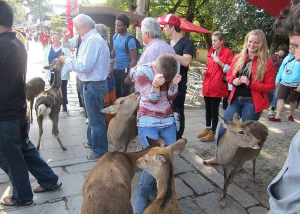 Γυναίκες και ζώα: Μια σχέση συχνά... επεισοδιακή! (13)