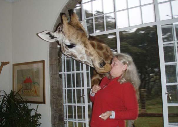 Γυναίκες και ζώα: Μια σχέση συχνά... επεισοδιακή! (17)