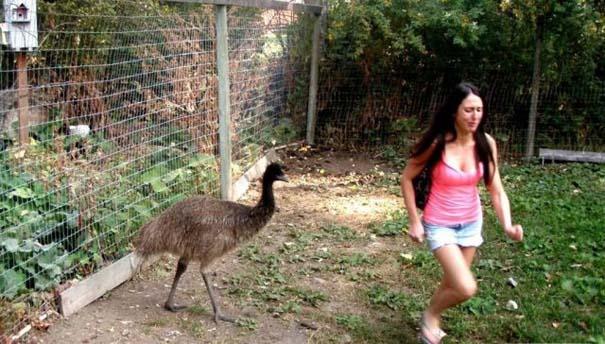 Γυναίκες και ζώα: Μια σχέση συχνά... επεισοδιακή! (25)