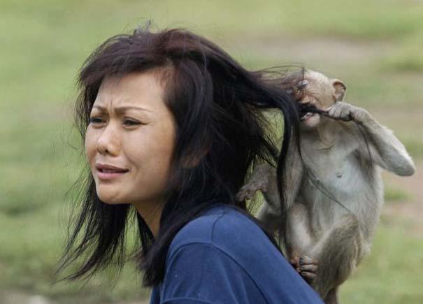 ζώα γυναίκες