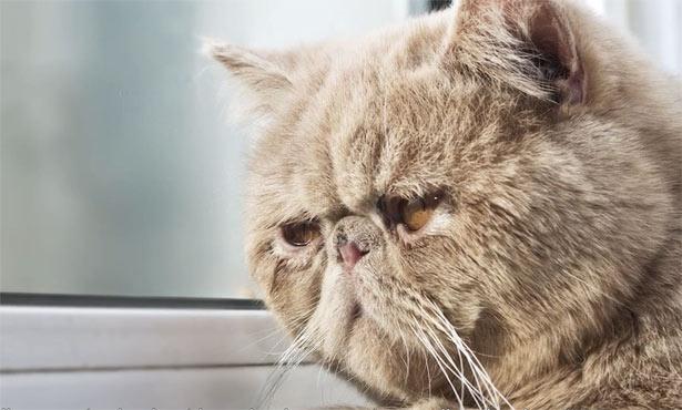 Το ημερολόγιο μιας δυστυχισμένης γάτας