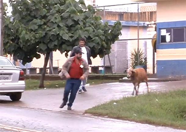 Κριάρι τρομοκρατεί τους κατοίκους σε γειτονιά της Βραζιλίας