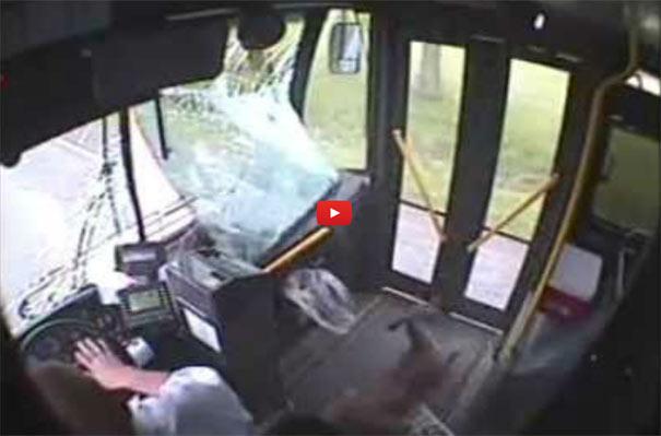 Λεωφορείο χτύπησε ελάφι με πολύ απρόσμενη κατάληξη