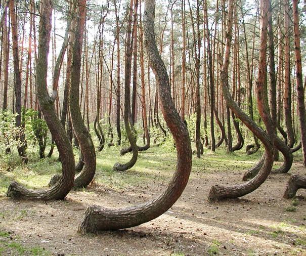 Το στραβωμένο δάσος | Φωτογραφία της ημέρας
