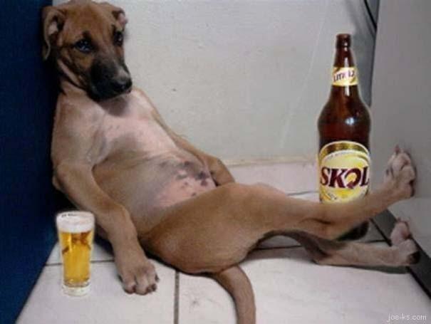 Σκύλοι που νικήθηκαν από την τεμπελιά (7)