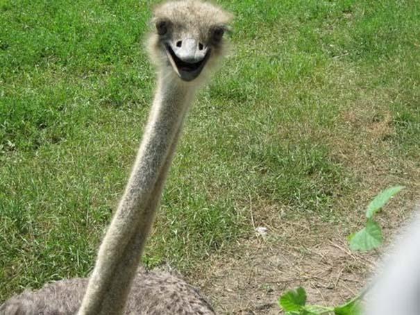 Χαμογελαστά ζώα (3)