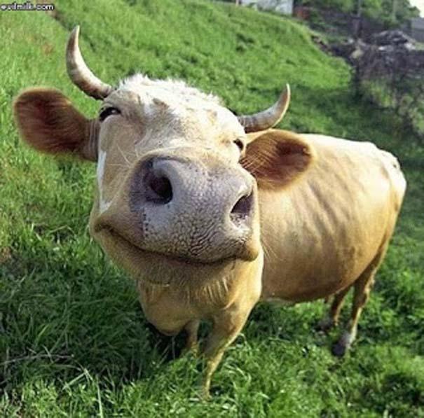 Χαμογελαστά ζώα (11)