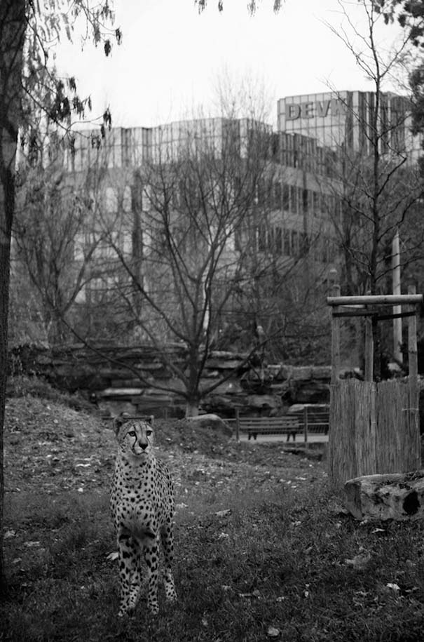 Η άλλη πλευρά των ζωολογικών κήπων... (2)