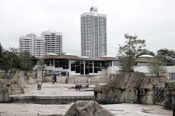 Η άλλη πλευρά των ζωολογικών κήπων... (5)
