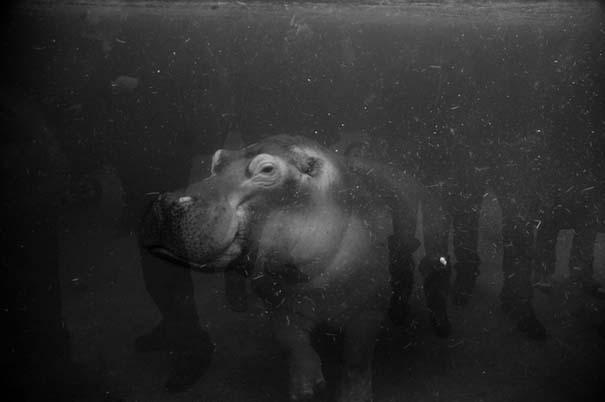 Η άλλη πλευρά των ζωολογικών κήπων... (6)