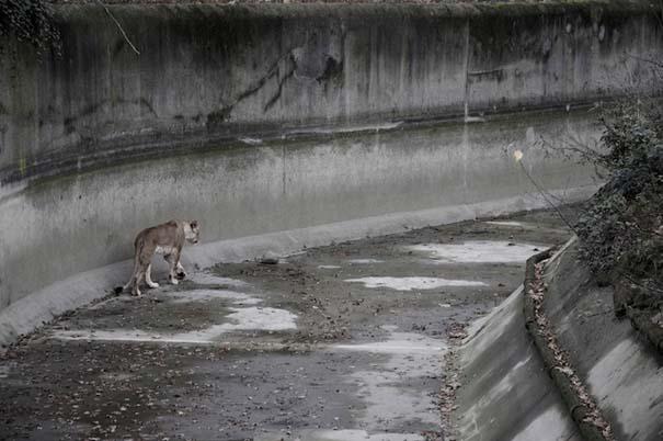 Η άλλη πλευρά των ζωολογικών κήπων... (7)