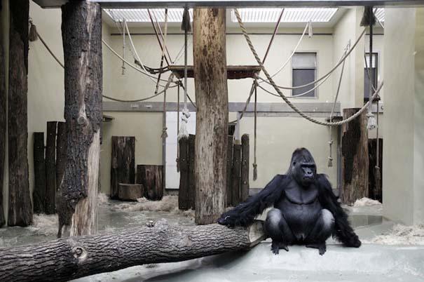 Η άλλη πλευρά των ζωολογικών κήπων... (9)