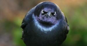 25 Angry Birds… στην κυριολεξία