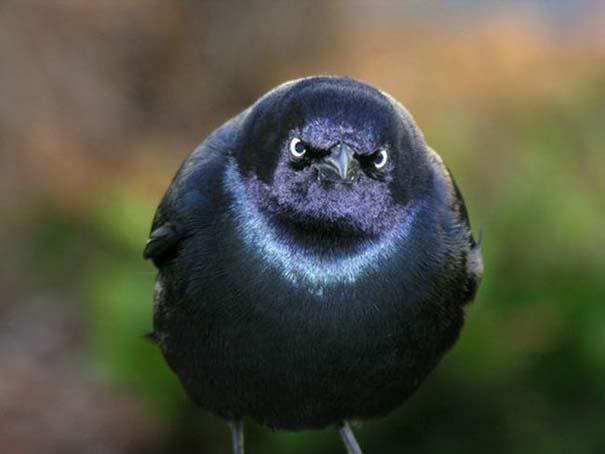 Angry Birds στην κυριολεξία (2)