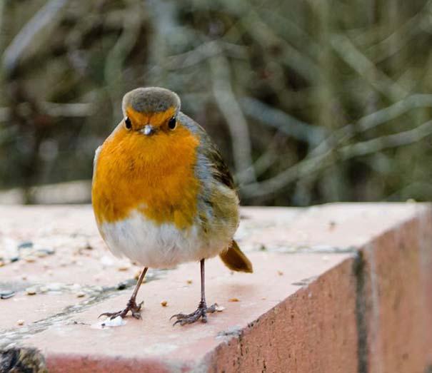 Angry Birds στην κυριολεξία (3)