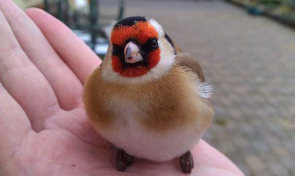 Angry Birds στην κυριολεξία (15)